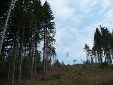 Lesní porost v Beskydech